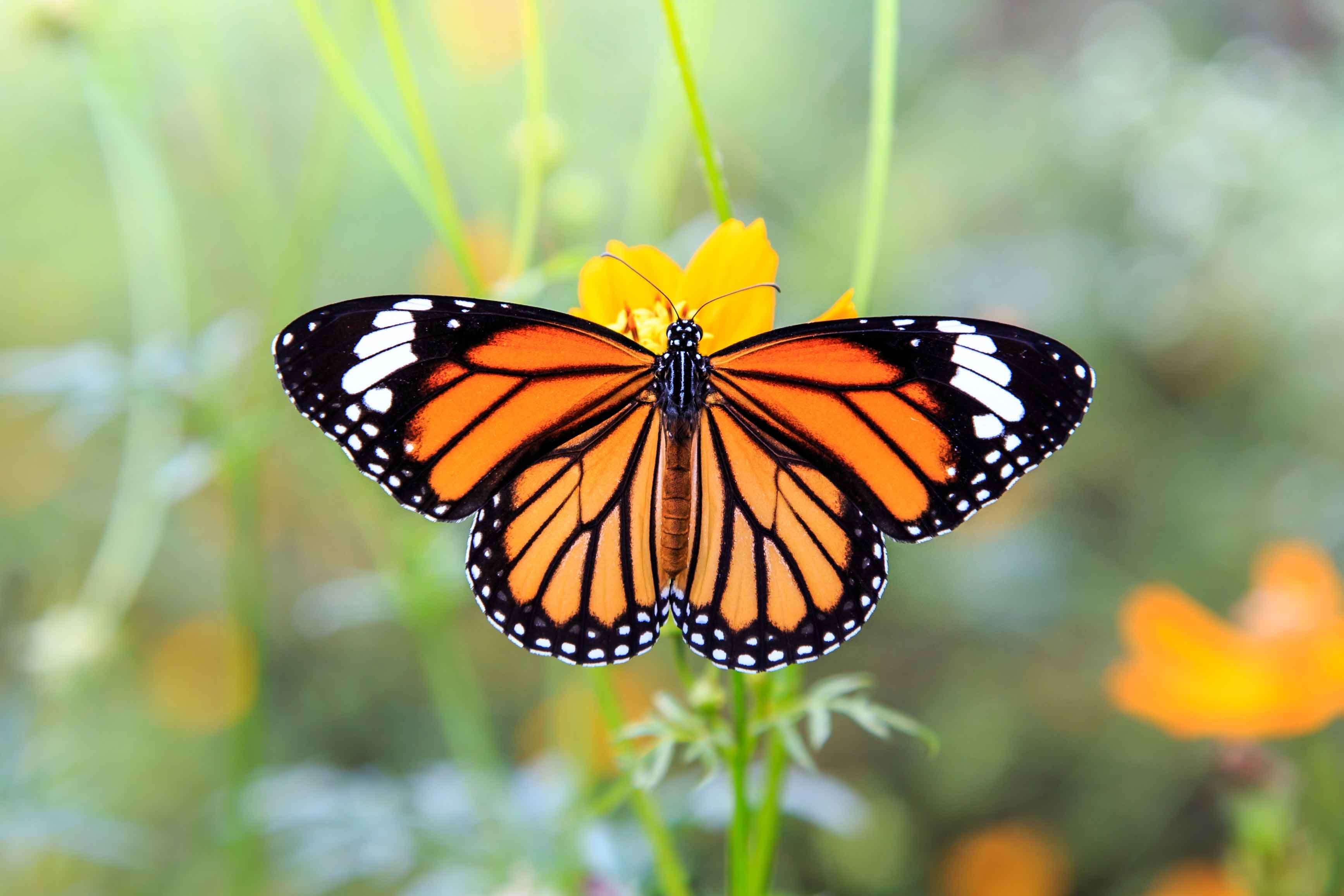 Main-Butterfly-Image